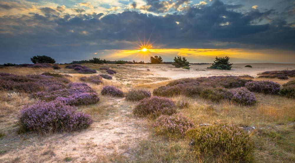Top 5 natuurgebieden in Nederland