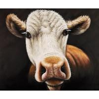 Canvas schilderij Koe, als foto