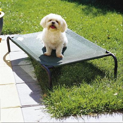 Coolaroo Coolaroo Pet bed voor kat of hond - green (groen) - SMALL - 71 x 55 cm