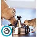 Santé et bien-être chien et chat