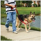 PetSafe Easy Walk trainingsysteem