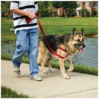 PetSafe Easy Walk wandellijn hond