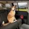 Kurgo by PetSafe Kurgo Car Door Guard - protection portes voiture (2 pieces)