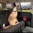 Kurgo Lifetime Warranty Kurgo Car Door Guard - bescherming autodeur (2 stuks)