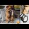 Kurgo by PetSafe Kurgo Enhanced Strength Tru-Fit Smart Harness - crash tested