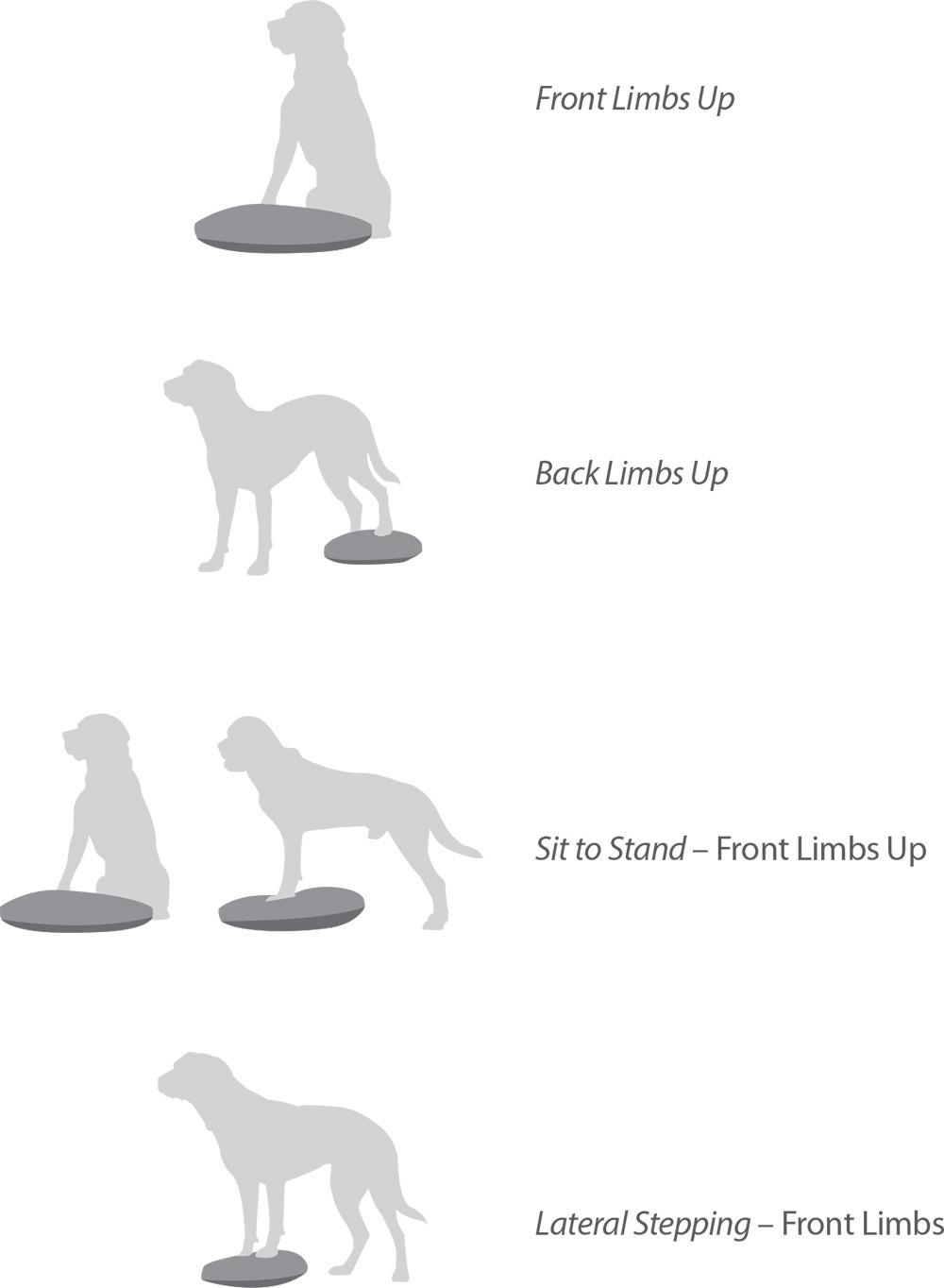 oefeningen FitPAWS Balance Disc