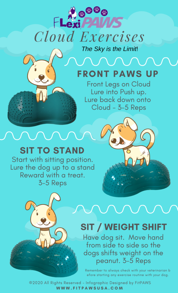 FlexiPAWS excercise