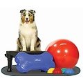 FitPAWS fitness & fun