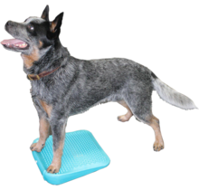 FitPAWS Dog Balance Ramp