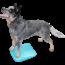 FitPAWS FitPAWS Dog Balance Ramp