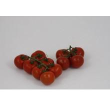 Geënte tros tomaten planten