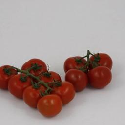 Moestuinplant Geënte trostomaten (9 planten)