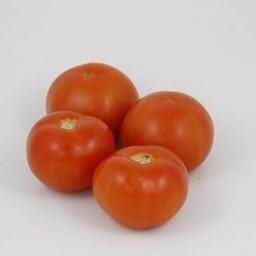 Moestuinplant geënte vleestomaten (9 planten)