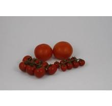 Mixpakket geënte tomaten planten