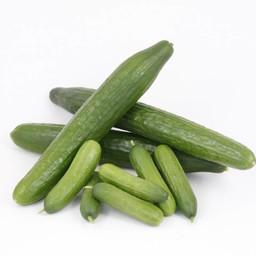 Moestuinplant mixpakket  geënte  komkommers (9 planten)
