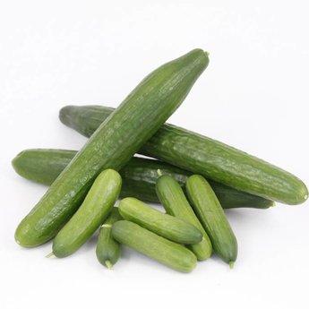 mixpakket diverse geënte  komkommerplanten