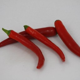 Moestuinplant Spaanse peper ( 9 planten)