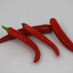 spaanse peper ( 9 planten)