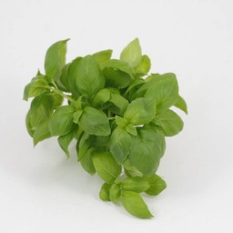 Moestuinplant basilicum (9 planten)