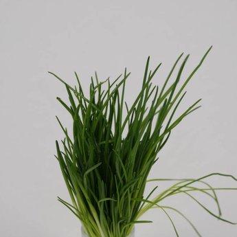 Moestuinplant Bieslook planten