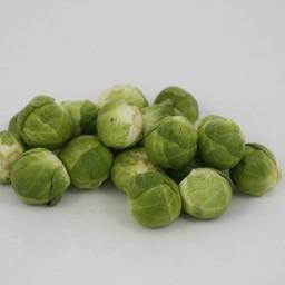 spruitkool (9 planten)