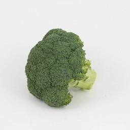 Moestuinplant broccoli (9 planten)