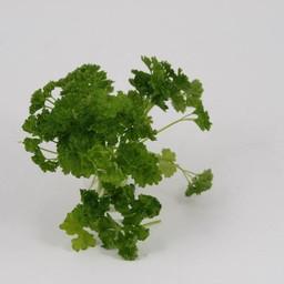 Moestuinplant peterselie (9 planten)