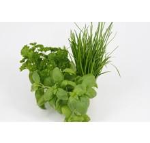 Mixpakket diverse kruidenplanten oregano, peterselie en basilicum
