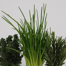 Moestuinplant Mixpakket kruiden  citroenmelisse, munt, tijm (9 planten)