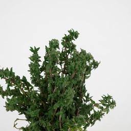 Moestuinplant tijm (9 planten)