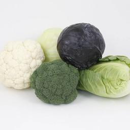 Moestuinplant mixpakket kool (9 planten)