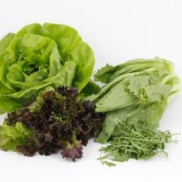 Moestuinplant mixpakket sla (9 planten)