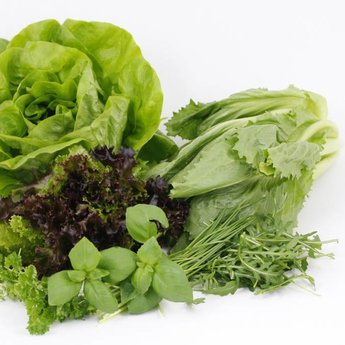 Moestuinplant Combipakket sla & kruiden planten
