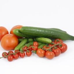tomaten, komkommer, (9 planten)