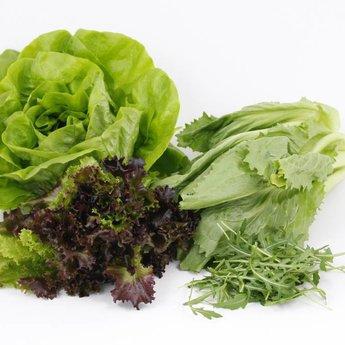 combipakket sla & kool planten