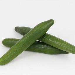 geënte  komkommer (9 planten)
