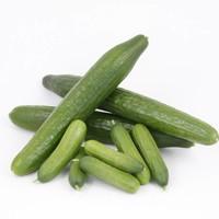 Komkommerplanten