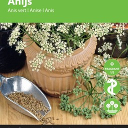 Moestuinplant Anijs