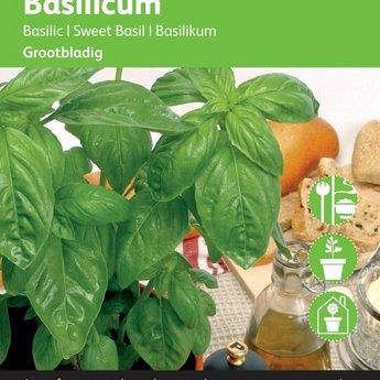 Moestuinplant Grove basilicum kruidenzaden