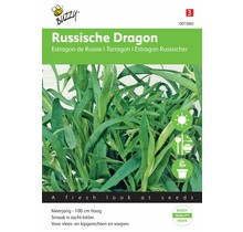 Dragon kruidenzaden