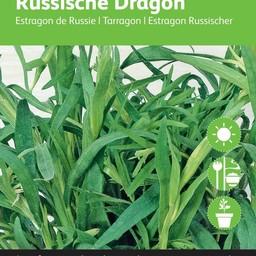Moestuinplant Dragon