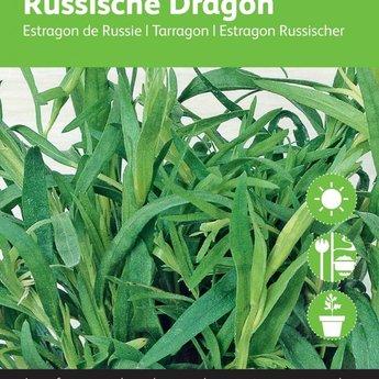 Moestuinplant Dragon kruidenzaden