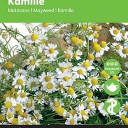 Moestuinplant Kamille