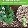 Moestuinplant Citroen Koriander
