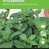 Moestuinplant Munt
