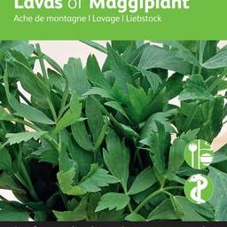 Moestuinplant Lavas (Maggikruid)