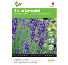 Lavendel kruidenzaden