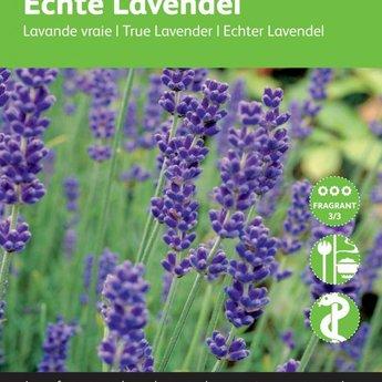 Moestuinplant Lavendel kruidenzaden