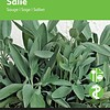 Moestuinplant Salie