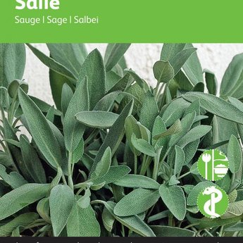 Moestuinplant Salie kruidenzaden